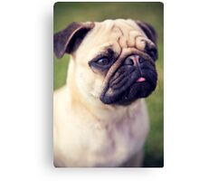 Cute Pug *PROCEEDS TO CHARITY* Canvas Print