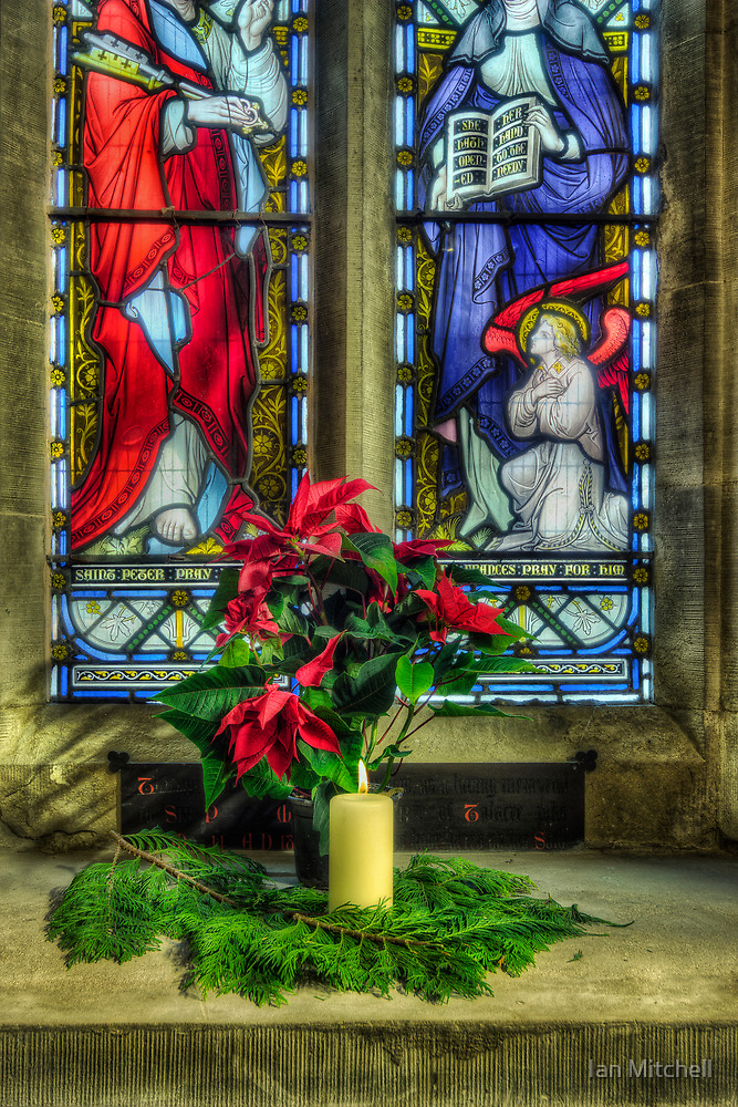 Christmas Poinsettia by Ian Mitchell