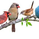 Assorted Songbirds on a Leafy Branch by Bonnie T.  Barry