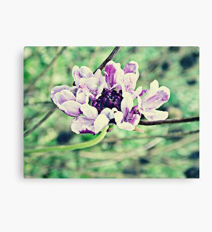 PANTONE - FLOWER #076 Canvas Print
