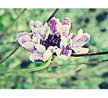 PANTONE - FLOWER #076 Photographic Print