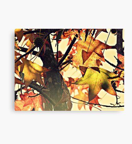 PANTONE #457 Canvas Print