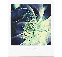 PANTONE #5285 Photographic Print