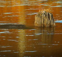 Stump in Some Water by Nazareth