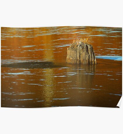 Stump in Some Water Poster