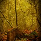 Tree Stump by Dave Godden