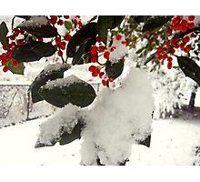 Feels Like Christmas Photographic Print