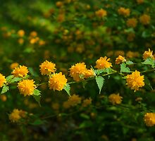 Yellow Flowering Shrub by Michael Shake