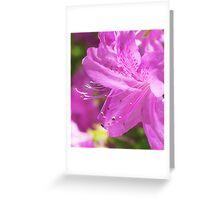 Pink Azalea Flowers Greeting Card