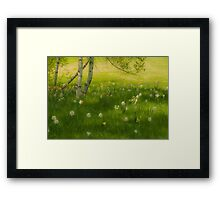 Birch Tree and Daffodils Framed Print
