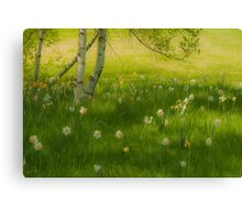 Birch Tree and Daffodils Canvas Print