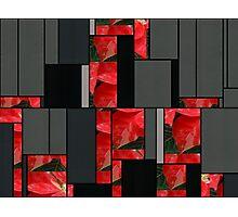 Mottled Red Poinsettia 1 Ephemeral Art Rectangles 7 Photographic Print