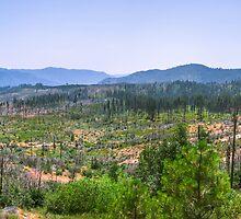 Yosemite Panoramic photo by Jerome Obille