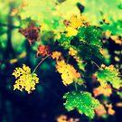 Fall by kumari