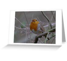 Robin for Christmas Greeting Card