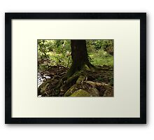 Mossy woodland trail Framed Print