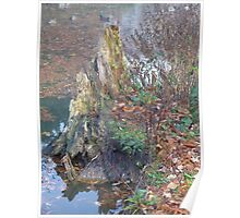 Colourful delapidated tree trunk Poster