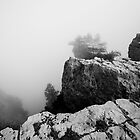 Black and White Foggy grand Canyon by Jerome Obille