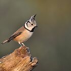Crested tit - I by Peter Wiggerman