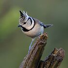 Crested tit - III by Peter Wiggerman