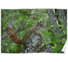Swamp Squirrel Poster