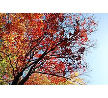 Autumn colours 1 of 3 Photographic Print