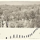 fence line, Clarke County Virginia by g richard anderson