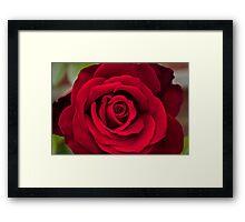 Rosey Red Framed Print