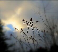 Hope ! by Elfriede Fulda