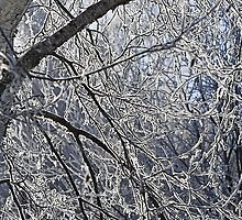 Frosty Branches  by Steve St.Amand