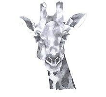 The Giraffe Photographic Print