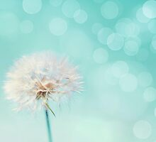 Dandelion by Stephanie Sherman