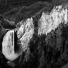 Lower Falls of the Yellowstone River Black and White by cavaroc