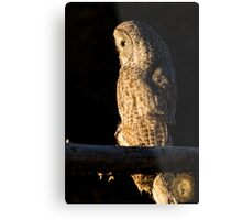 Perched Great Gray Owl Metal Print