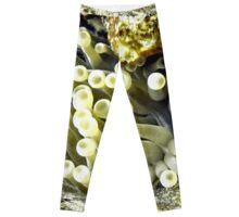 Yellow Sea Anemone Leggings