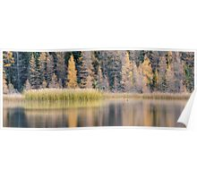 Duck on Grayling Lake Poster