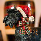 Santa Pup by jlechuga