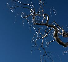 Silver and Blue - a Metal Tree Sculpture Plus Blue Sky and Sunshine by Georgia Mizuleva