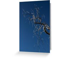 Silver and Blue - a Metal Tree Sculpture Plus Blue Sky and Sunshine Greeting Card