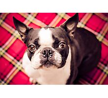 Have you hugged your dog today? Photographic Print