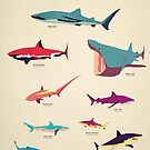 Sharks by Simon Alenius