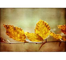 Textured Autumn Leaves Photographic Art Photographic Print