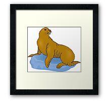 Seal 24 Framed Print