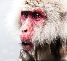 Snow Monkey - Jigokudani Monkey Park, Japan Sticker