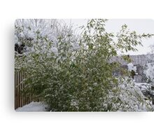 Snowy Bamboo  Canvas Print