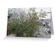 Snowy Bamboo  Greeting Card
