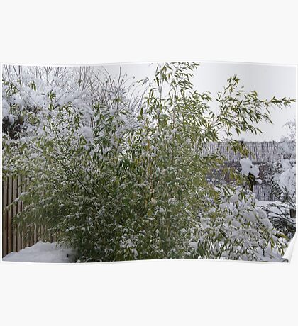 Snowy Bamboo  Poster