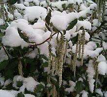 Snowkins  by KirstyJSwinger