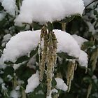 Droop in White Snow  by KirstyJSwinger