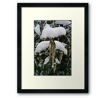 Droop in White Snow  Framed Print
